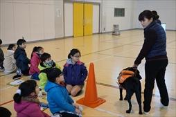 盲導犬の学習