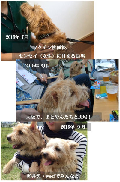 マー201512用③[2]