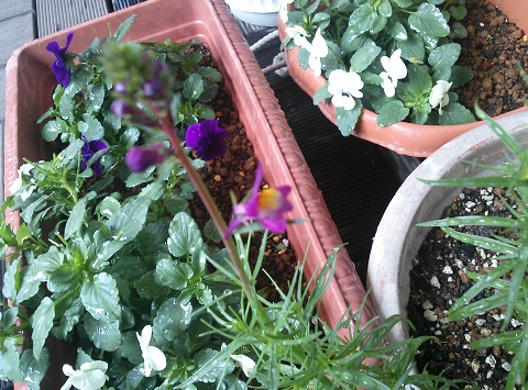 gardening606.jpg