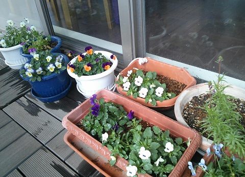 gardening607.jpg