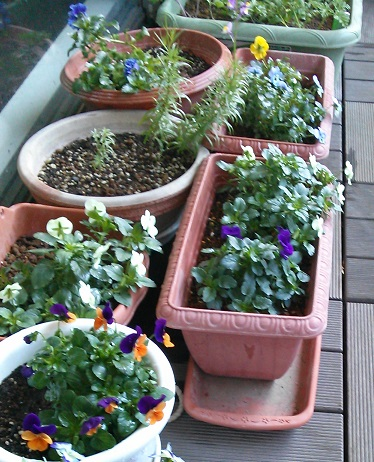 gardening611.jpg