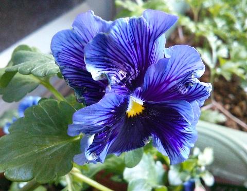 gardening612.jpg
