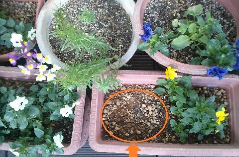 gardening616.jpg