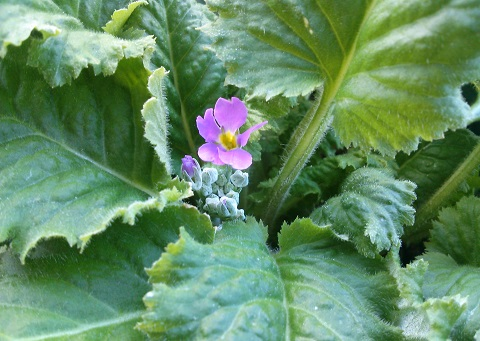 gardening617.jpg
