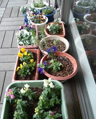 gardening620.jpg
