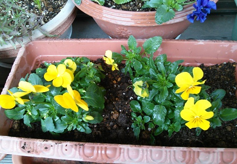 gardening621.jpg