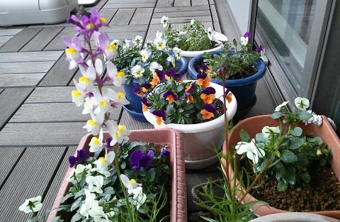 gardening624.jpg