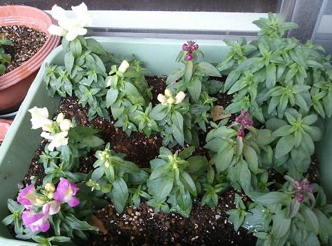 gardening625.jpg