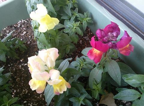 gardening633.jpg