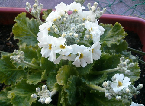 gardening634.jpg