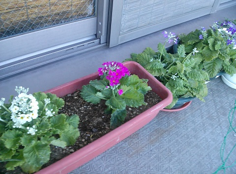 gardening636.jpg