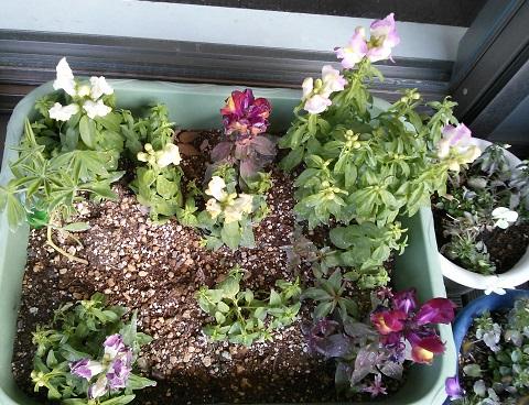 gardening646.jpg