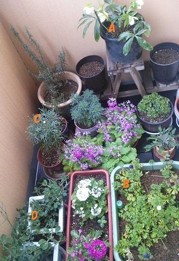 gardening649.jpg