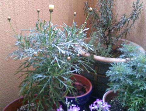 gardening651.jpg