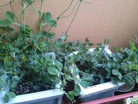 gardening652.jpg