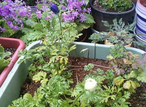 gardening653.jpg