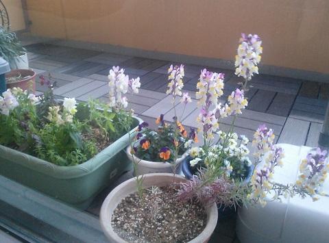 gardening655.jpg