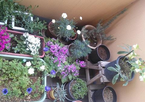 gardening656.jpg