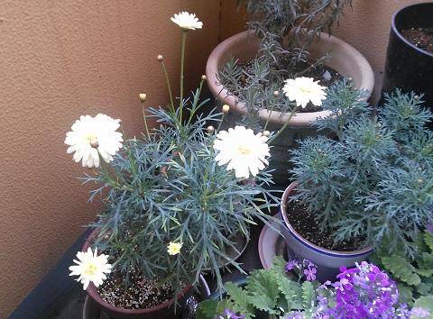 gardening659.jpg