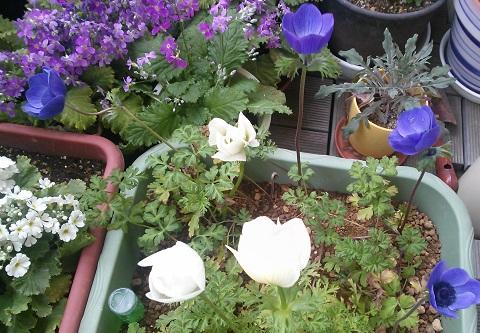 gardening660.jpg