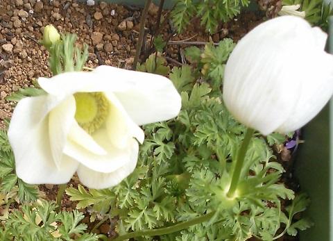 gardening662.jpg
