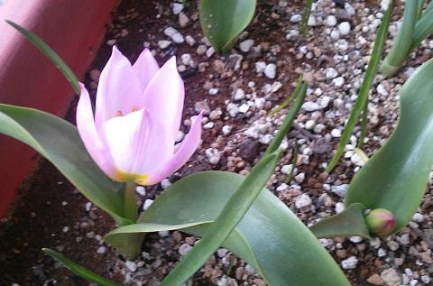 gardening667.jpg