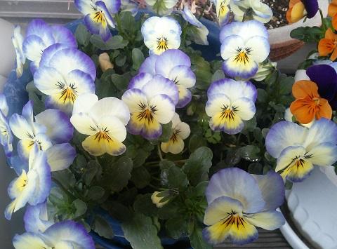 gardening669.jpg