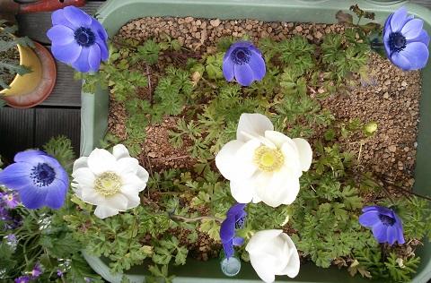 gardening670.jpg