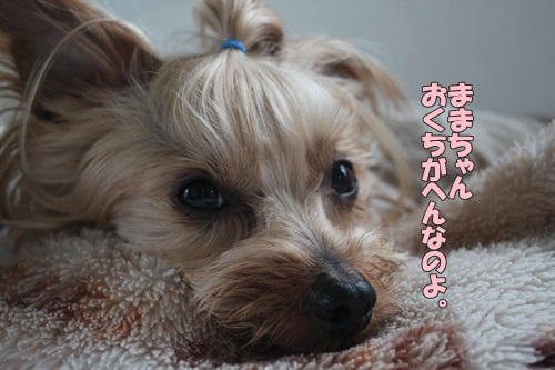 IMG_72550.jpg