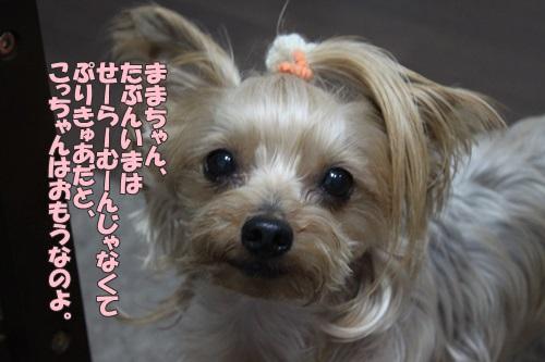 IMG_72990.jpg