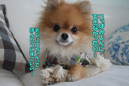 IMG_751800.jpg