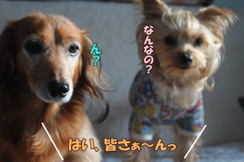 IMG_755200.jpg