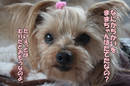 IMG_763800.jpg