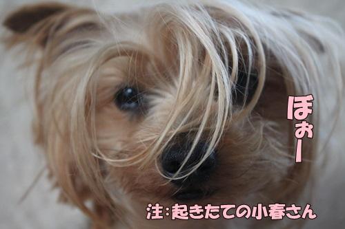 IMG_773300.jpg