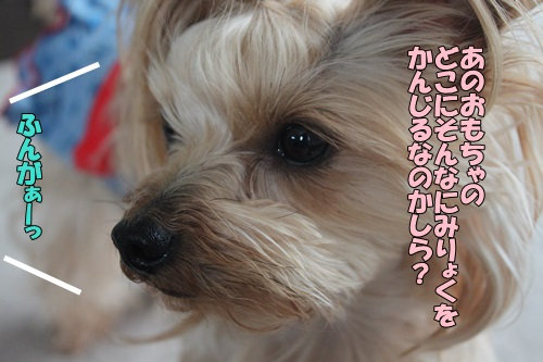 IMG_774900.jpg