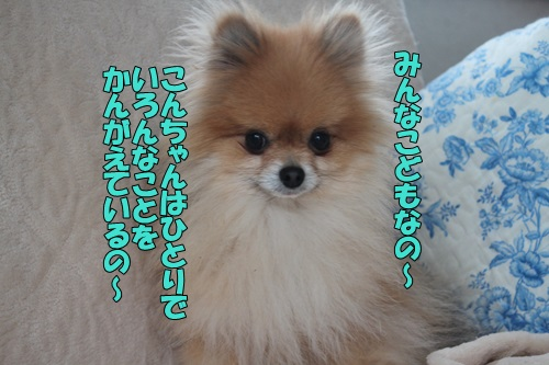 IMG_786200.jpg
