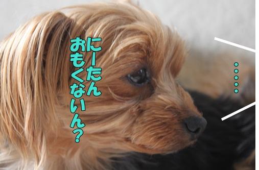 IMG_799800.jpg