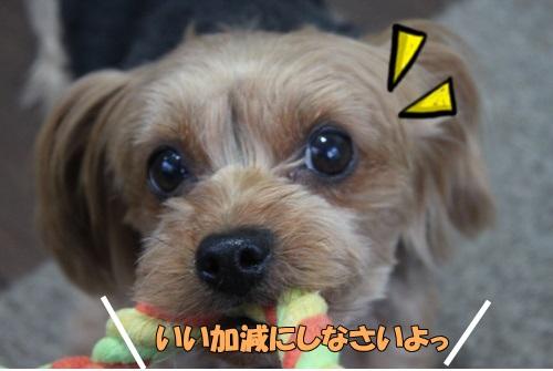 IMG_811300.jpg