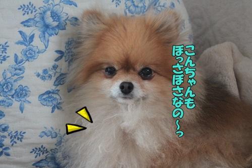 IMG_812600.jpg