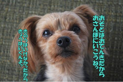 IMG_819700.jpg