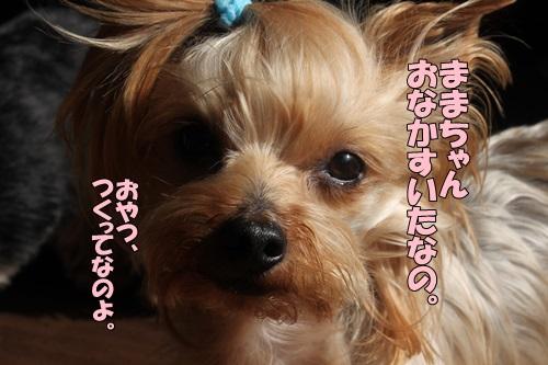 IMG_821100.jpg