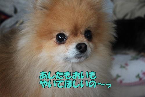 IMG_826400.jpg
