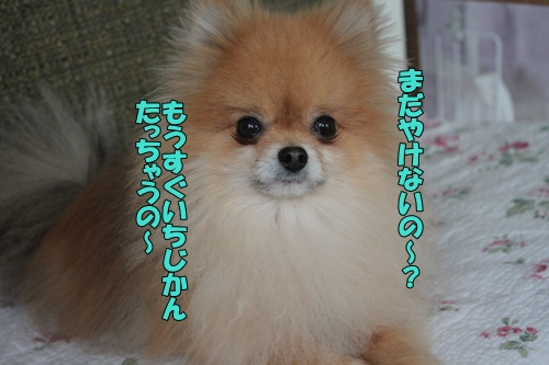 IMG_827600.jpg