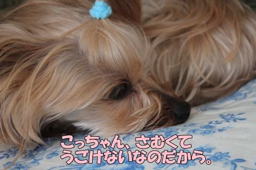 IMG_829700.jpg
