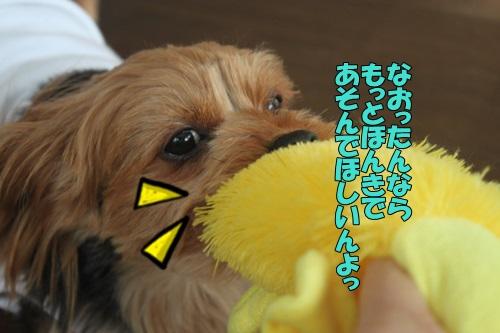 IMG_834600.jpg