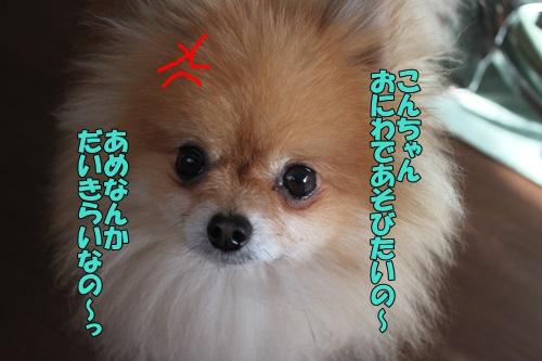 IMG_846200.jpg