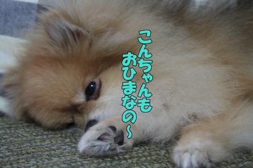 IMG_846500.jpg