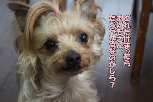 IMG_856600.jpg