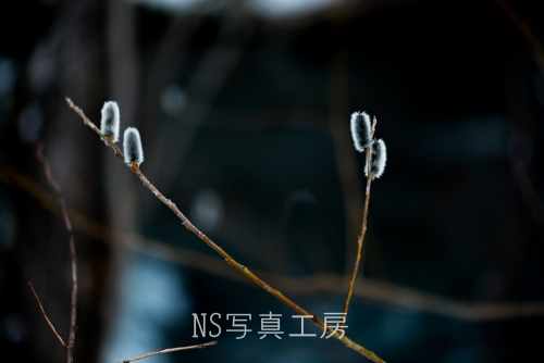 _DSC5066.jpg