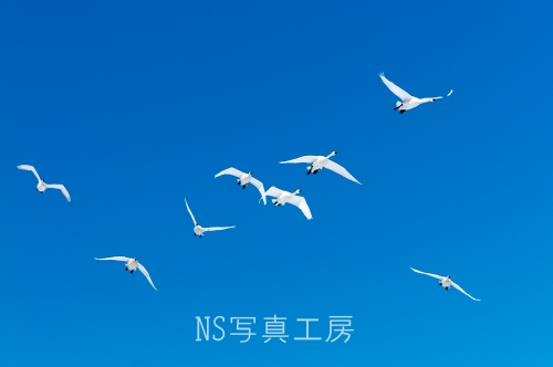 _DSC7570.jpg